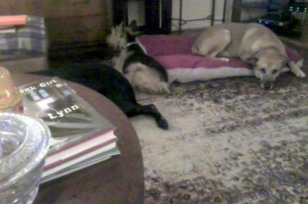Dogs on floor watching basketball