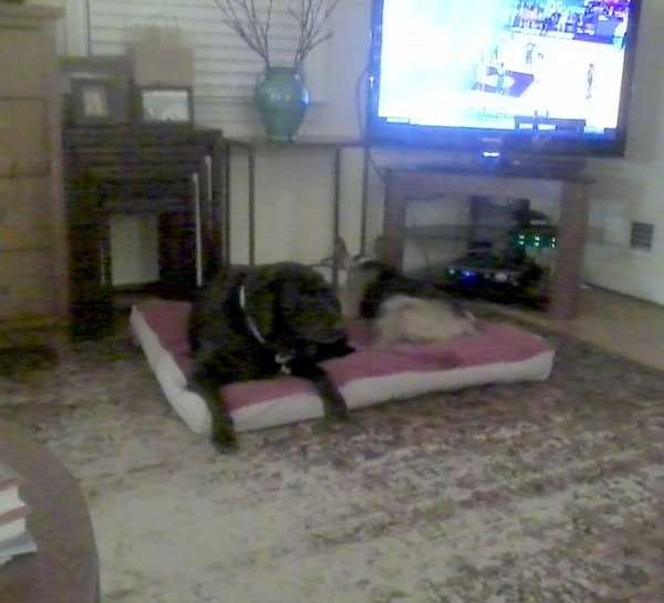 Dogs on floor watching bb3