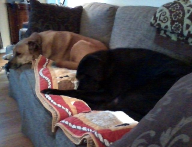 Chelsea and Spike on sofa 3