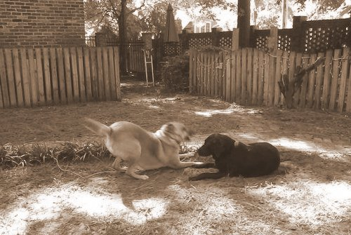 Chelsea and Spike at play 5-001