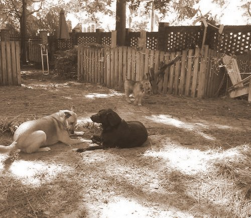 Chelsea and Spike at play 9-002