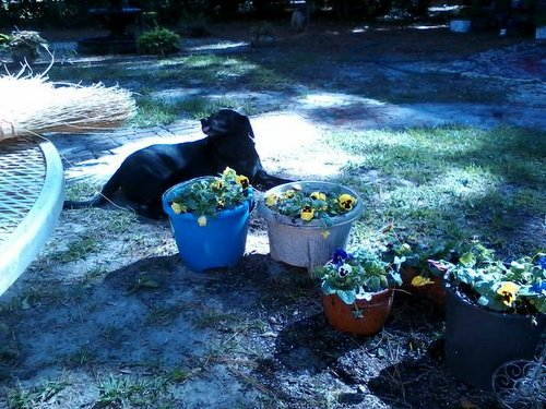 Chelsea behind flowers 2
